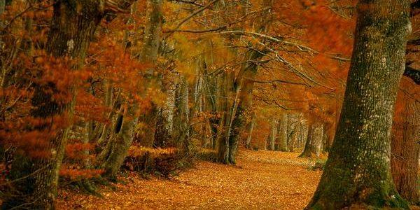 Autumn adventures in Dunblane