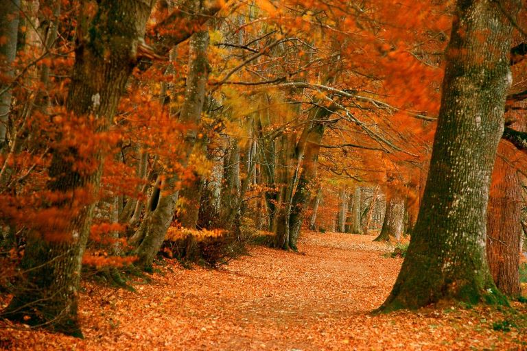 autumn perthshire